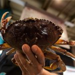 GREEN SPACE: Climate change could further delay crab season https://t.co/FIXmYzX3Ac via @robynpurchia https://t.co/vmjsxqruBW
