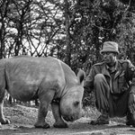 Meet Ringo! Hes a baby Southern White Rhino being cared for by the dedicated tea... #ringo #africa #kenya #olpejeta https://t.co/UBoCnyP6iR
