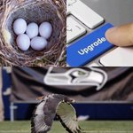 .@Ravens @AtlantaFalcons @Eagles If were talkin birds.. https://t.co/Xd7DutJZRn