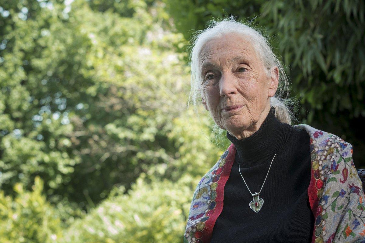 """Jane Goodall: """"Las redes sociales aumentan la concienciación medioambiental"""" https://t.co/13dMjIeaGE vía @EFEverde https://t.co/mwoBOtuIiz"""