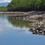 @jcu scientists working on what should be done to save our last #shellfish reefs #oysterlove https://t.co/jdFFXCWN4S https://t.co/ccPJNd4vtH