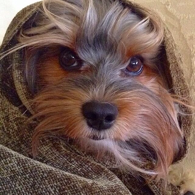 Cultivate kindness with all around, life is better when love abounds. It's the Philosophy of FattieButters. #犬 #dogs https://t.co/n63aPCVPkP