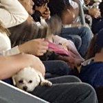 A real Dodger dog at Dodger Stadium https://t.co/RNMKR0a8MC