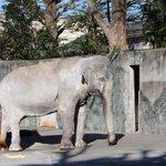 本日午後、井の頭自然文化園のアジアゾウ「はな子」が残念ながら死亡しました。Hanako the Asiatic elephant at Inokashira Park Zoo has passed away today. https://t.co/QjOtr931of