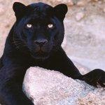 Crisis en el zoo: denuncian que no aparece el cadáver de la pantera muerta https://t.co/7JaNlgBjyi https://t.co/AZwnD8UDiH
