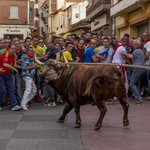 Primero el Toro de la Vega, ahora el #ToroEnmaromado ¡STOP FESTEJOS TAURINOS! https://t.co/iKDXkkWKDC