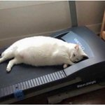 Cuando quieres ponerte en forma para el verano pero no está funcionando porque la vida es dura. https://t.co/mGhT52654b