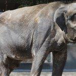 【追悼】ゾウの「はな子」死す、69歳 戦後初めて日本に来たアジアゾウ 「今までありがとう」の声 https://t.co/dHp06ZVuda https://t.co/uUcUvg2YSV