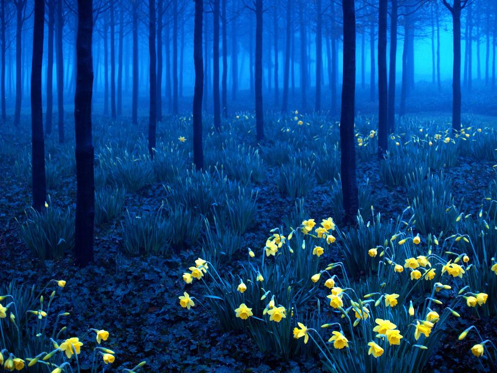 Germany-The Black Forest, a mountainous region in southwest Germany, is known for its dense evergreen forests. https://t.co/prfwfVhe8H