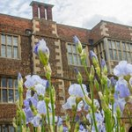 This week is Iris Week at @DoddingtonHall, plus there are two street markets in Lincoln. https://t.co/8JmI7MD4TG https://t.co/UiJAcz5Vx3