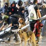 ¿Por qué los perros siempre se suman a las protestas? ???? https://t.co/e3xtaJzEXI https://t.co/W2TMGYLUJL