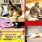 """A book of #cats in """"sexy"""" poses. Thanks, #Japan! https://t.co/c2Dm6KiPqO https://t.co/wH3adLBaaf"""