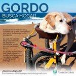 #FelizJueves ayúdanos a encontrarle casa al Gordo! Solo un RT puede alegrar su día @FundJulieta @F_GarrasyPatas ???????? https://t.co/LGdPvk1vvi
