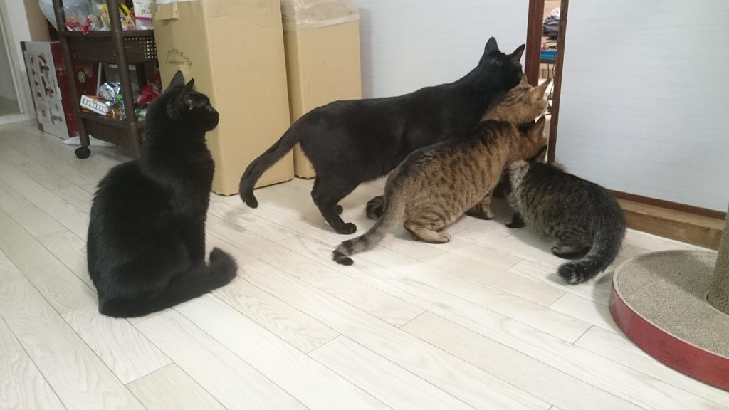 なぜ女学生関係でネコがすぐ荒らしに来るんだ? [無断転載禁止]©bbspink.comxvideo>5本 ->画像>1057枚
