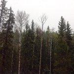 Snow! in Florissant. Thanks Alex Smith https://t.co/yQMmhCxpt6
