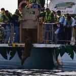 Liberando un lobo marino en #Mazatlán. 🌴🌴 https://t.co/snuuFMilwz