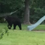 Black bear spotted tonight on Ralston Road off Hwy 49 near Hattiesburg. Viewer sent in pics. https://t.co/nYyaTZuwaZ
