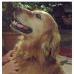 #Chillán por favor RT perrito perdido villa Los Andes- regimiento. https://t.co/w4uaryD3Qu