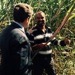 Je retrouve cette île de La Réunion que jaime tant. Loccasion déchanger avec des exploitants de canne à sucre -NS https://t.co/mSsOIOqei1