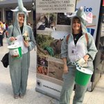 In #London today? Come say hello to our lovely bucketeers collecting for #elephants at Waterloo Station! https://t.co/dqXHMl1KUZ