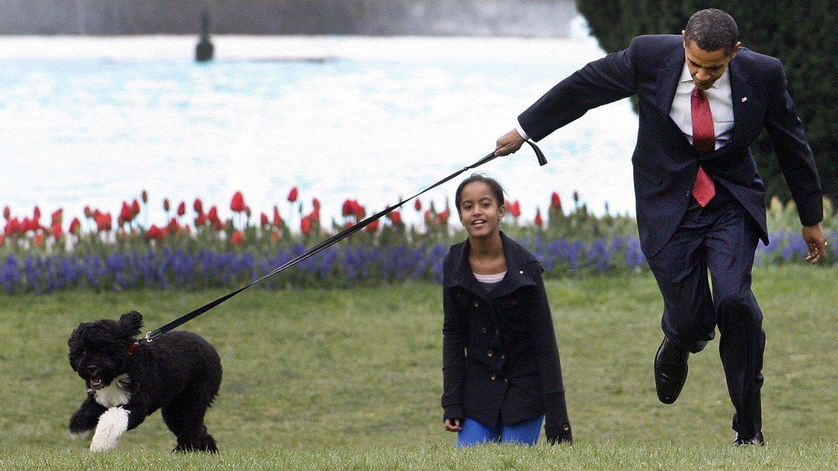 オバマ大統領の飼い犬のボー君、散歩中にオバマ大統領を思いっきり引っ張り回したり、走っちゃいけない感じの廊下を一緒に全力疾走したり、シークレット・サービスの人とサッカーしたり、自由に生きてる感じで好き https://t.co/WjRCf8o1fl