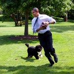 オバマ大統領の飼い犬のボー君、散歩中にオバマ大統領を思いっきり引っ張り回したり、走っちゃいけない感じ…