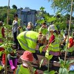 Over 100 Bath school children have been busy planting hundreds of sunflowers by Avon Street! https://t.co/brjvgThmiC https://t.co/VAWylrwGCd