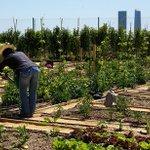 Ya puedes solicitar tu huerto urbano en el Parque Guadaíra #Sevillahoy https://t.co/Z61Ia3SXj1 https://t.co/ptmsJS1UUr