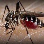 Case of Zika confirmed in Dane County #news3 https://t.co/oILfcEh0VU https://t.co/J68oqbtaJu
