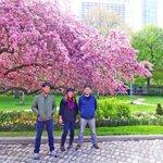 We love springtime in #Toronto :) https://t.co/wUx1lloHve