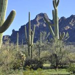 Get back to nature with an Outdoor Adventure in #Tucson: https://t.co/9Zufat1ki5 https://t.co/1U1093GDd5