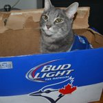 With @budcanada and the Clydesdales at the @BlueJays game, I got myself some great box seats! Meow! #BlueJays https://t.co/jInySQeaw3