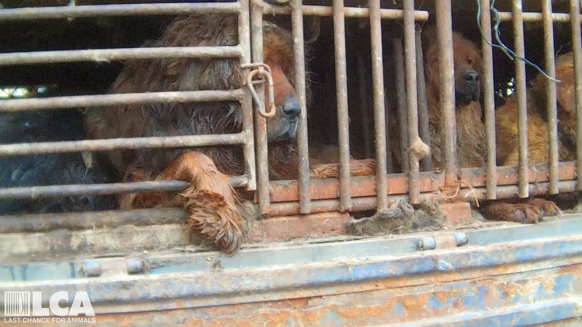 STOP YULIN FOREVER!  Go to https://t.co/acePXqRZQP and sign the petition.  Sign & Share!  PLEASE. #StopYulinForever https://t.co/b5B5pPWDI1
