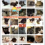 #URGENT #NYC 27 innocent #CATS need our help by 5/28-PLS RT/adopt/foster/pledge! https://t.co/aIWsshwwaA https://t.co/ZHBpvUYCkh