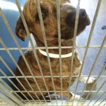 Maricopa animal shelter selling most dogs at $20 they need a home:(((( https://t.co/uDii3w5Xbo