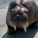 Man killed by walrus he took a selfie with, report says https://t.co/NotGOZ8nOR https://t.co/TGsF8cv4SC