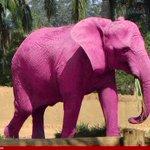 Masih ingat lagi gajah di botol mandian carrie junior?  Dah besar dia sekarang ni.Tapi dengar cerita dah kena makan https://t.co/6uqpnNNxHi
