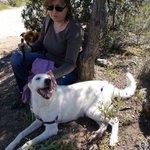Isla perra de 2 años en #adopcion en #Madrid 635 03 25 59 https://t.co/PyX5PatkXU
