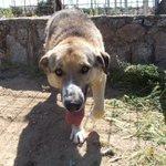 Miuchi perro de 3 años en #adopcion en #Madrid 635 03 25 59 https://t.co/kpzZXiLixf