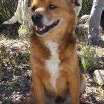 DOB perro de 12 años en #adopcion en #Madrid 635 03 25 59 https://t.co/sJn0NTd00t