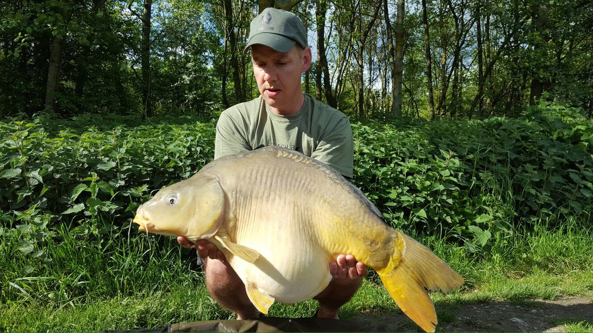 Thats what we call a fat <b>Belly</b>.... Caught by @frankvdooren #NCC #Carpfishing https://t.co/6HJ
