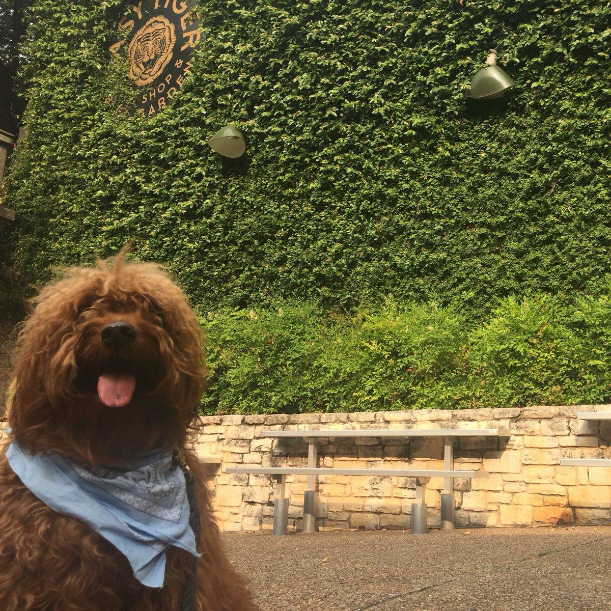 Check out @ZagatAustin guide to 13 dog-friendly restaurants & bars in #Austin https://t.co/tTVV5odnbF https://t.co/WQXXJbLK0K