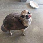 q tipo de tartaruga é essa¿¿¿ https://t.co/RuApqliswF