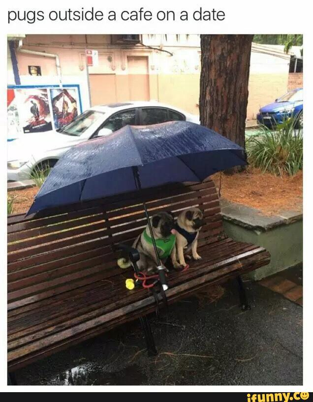 Pugs outside a cafe on a date...