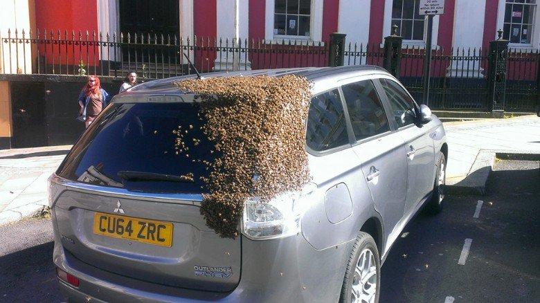 A swarm of bees chased this car for two days to rescue their queen https://t.co/e07wfwKscr