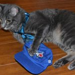 BAUTISTA TIES THE GAME! Love you, @JoeyBats19! #BlueJays https://t.co/0tcPsNVRXz