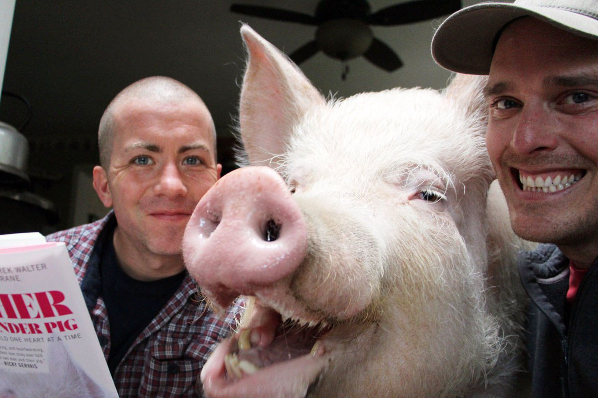 How a 'mini-pig' became a 650-pound social media star  https://t.co/GY0WnRavpE  #GoVegan #Vegan @EstherThePig https://t.co/iCz0jeoF78
