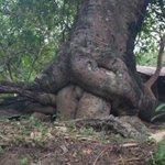 até a árvore tá trepando e eu n https://t.co/3ng6KRxvK6
