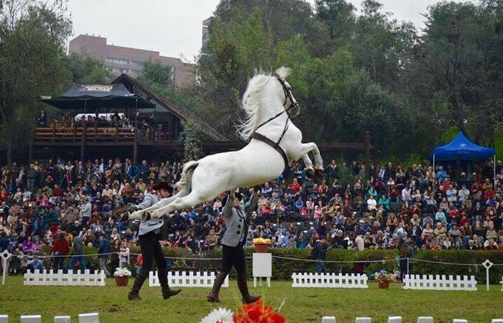 Dato familiar para el domingo: espectáculo con caballos españoles de @ArteEcuestreCh (gratis) en la Escuela Militar https://t.co/iG7EFUPJIV