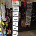 In vendita in anteprima da @LeChicche1 di Isola Maggiore: 12 diverse cartoline dei pesci del #trasimenolake #escile! https://t.co/5PVPGPkmc0